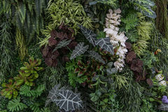 Υπόβαθρο φύσης και σύσταση ή ταπετσαρία Στοκ Εικόνες