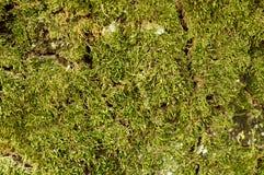 Υπόβαθρο φύσης: Λάσπη σε ένα δέντρο Στοκ Φωτογραφίες