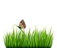 Υπόβαθρο φύσης με την πράσινη χλόη και μια πεταλούδα Στοκ Εικόνα