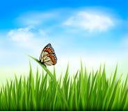 Υπόβαθρο φύσης με την πράσινη χλόη και μια πεταλούδα Στοκ Φωτογραφία