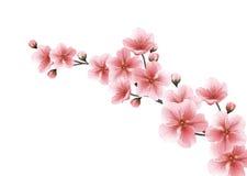 Υπόβαθρο φύσης με τον κλάδο ανθών των ρόδινων λουλουδιών Στοκ εικόνα με δικαίωμα ελεύθερης χρήσης