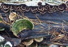 Υπόβαθρο φύσης των μανιταριών Στοκ Φωτογραφίες