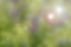 Υπόβαθρο φύσης Blured με τον πράσινο τόνο Στοκ Εικόνα
