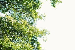 Υπόβαθρο φύσης Gree Στοκ Εικόνα