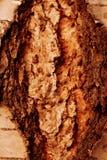 Υπόβαθρο φλοιών δέντρων στοκ εικόνες