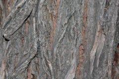 Υπόβαθρο φλοιών λευκών Στοκ εικόνα με δικαίωμα ελεύθερης χρήσης