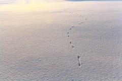 Υπόβαθρο χειμερινής σύστασης χιονιού πάγου Στοκ εικόνες με δικαίωμα ελεύθερης χρήσης