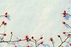 Υπόβαθρο χειμερινού χιονιού που διακοσμείται με τα μούρα ροδαλών ισχίων Στοκ φωτογραφία με δικαίωμα ελεύθερης χρήσης