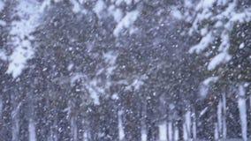 Υπόβαθρο χιονοπτώσεων στο δάσος χειμερινών πεύκων με τα χιονώδη χριστουγεννιάτικα δέντρα κίνηση αργή απόθεμα βίντεο