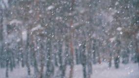 Υπόβαθρο χιονοπτώσεων στο δάσος χειμερινών πεύκων με τα χιονώδη χριστουγεννιάτικα δέντρα κίνηση αργή φιλμ μικρού μήκους