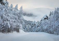 Υπόβαθρο Χριστουγέννων με έναν δρόμο που οδηγεί μέσω ενός δάσους των χιονωδών δέντρων έλατου, ομίχλη στο υπόβαθρο Στοκ Φωτογραφίες