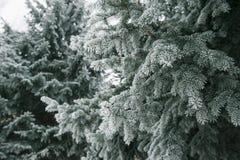 Υπόβαθρο Χριστουγέννων με τα χιονώδη δέντρα έλατου Στοκ εικόνα με δικαίωμα ελεύθερης χρήσης