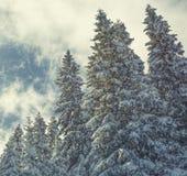 Υπόβαθρο Χριστουγέννων με τα χιονώδη δέντρα έλατου Στοκ φωτογραφία με δικαίωμα ελεύθερης χρήσης