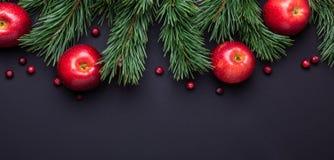 Υπόβαθρο Χριστουγέννων με τους κλάδους δέντρων, τα κόκκινα μήλα και τα τα βακκίνια Σκοτεινός ξύλινος πίνακας στοκ φωτογραφίες