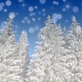 Υπόβαθρο Χριστουγέννων με το χιονισμένο βόστρυχο έλατου Στοκ Εικόνα