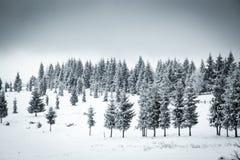 υπόβαθρο Χριστουγέννων του χιονώδους χειμερινού τοπίου Στοκ Φωτογραφίες