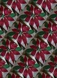 Υπόβαθρο Χριστουγέννων Poinsettia Στοκ φωτογραφίες με δικαίωμα ελεύθερης χρήσης