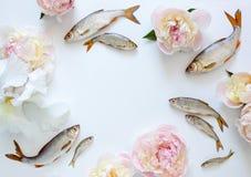 Υπόβαθρο ψαριών και λουλουδιών Στοκ φωτογραφία με δικαίωμα ελεύθερης χρήσης