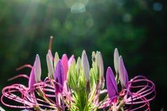Υπόβαθρο Bokeh με το λουλούδι Στοκ εικόνες με δικαίωμα ελεύθερης χρήσης