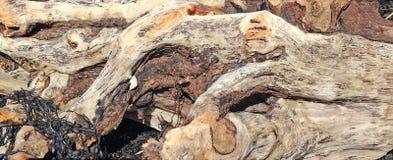 Υπόβαθρο Driftwood Στοκ Φωτογραφία
