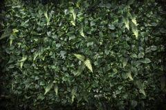 Υπόβαθρο GrassJungle τοίχων φύλλων Στοκ Φωτογραφίες