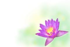 Υπόβαθρο Lotus Στοκ Φωτογραφίες