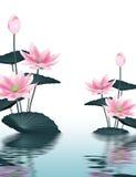 Υπόβαθρο Lotus Στοκ Εικόνες