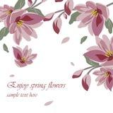 Υπόβαθρο Magnolia ανοίξεων ανθών λουλουδιών Στοκ εικόνα με δικαίωμα ελεύθερης χρήσης