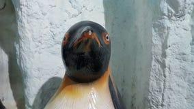 Υπόβαθρο Penguin Στοκ φωτογραφίες με δικαίωμα ελεύθερης χρήσης