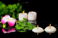 Υπόβαθρο SPA του λουλουδιού plumeria, πράσινο σπαράγγι κλάδων, φτέρη Στοκ φωτογραφία με δικαίωμα ελεύθερης χρήσης