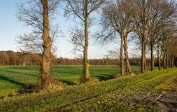 Υπόλοιπος κόσμος των γυμνών κορμών δέντρων που σκιαγραφούνται ενάντια στο μπλε ουρανό Στοκ φωτογραφία με δικαίωμα ελεύθερης χρήσης