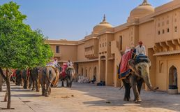 Υπόλοιπος κόσμος των ελεφάντων στο ηλέκτρινο οχυρό στοκ εικόνες