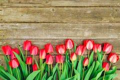 Υπόλοιπος κόσμος των φωτεινών πλούσιων κόκκινων λουλουδιών τουλιπών στο μίσχο Ξύλινο υπόβαθρο με το scopy διάστημα κειμένων Ευπρό στοκ εικόνες με δικαίωμα ελεύθερης χρήσης