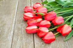 Υπόλοιπος κόσμος των φωτεινών πλούσιων κόκκινων λουλουδιών τουλιπών στο μίσχο Ξύλινο υπόβαθρο με το scopy διάστημα κειμένων Ευπρό στοκ φωτογραφίες