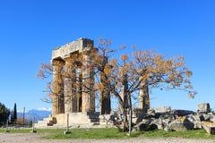 Υπόλοιπος στήλες του ναού απόλλωνα σε αρχαίο Corinth Ελλάδα με το δέντρο στο πρώτο πλάνο και του χιονιού που καλύπτεται mountians Στοκ Φωτογραφία