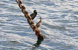 Υπόλοιπο στην αλιεία Στοκ Φωτογραφίες
