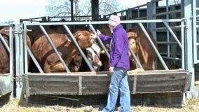 Υπόστεγο βοοειδών απόθεμα βίντεο