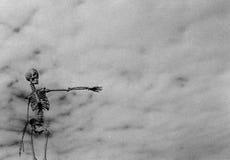 υπόδειξη του σκελετού Στοκ εικόνες με δικαίωμα ελεύθερης χρήσης