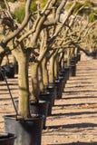Υπόλοιπος κόσμος των δέντρων Στοκ εικόνες με δικαίωμα ελεύθερης χρήσης
