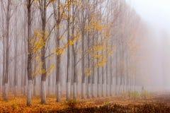 Υπόλοιπος κόσμος των λευκών φθινοπώρου από τη λίμνη Στοκ εικόνες με δικαίωμα ελεύθερης χρήσης