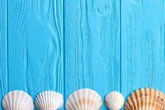 Υπόλοιπος κόσμος των θαλασσινών κοχυλιών, μπλε υπόβαθρο Στοκ εικόνα με δικαίωμα ελεύθερης χρήσης