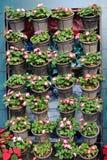 Υπόλοιπος κόσμος των δοχείων λουλουδιών Στοκ εικόνα με δικαίωμα ελεύθερης χρήσης
