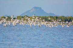 Υπόλοιπος κόσμος seagull Στοκ φωτογραφίες με δικαίωμα ελεύθερης χρήσης