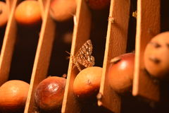 υπόλοιπο νύχτας σκώρων πεταλούδων Στοκ εικόνα με δικαίωμα ελεύθερης χρήσης