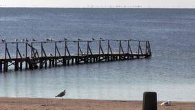Υπόλοιπο seagulls στο κιγκλίδωμα της αποβάθρας, μια πρόσδεση βαρκών απόθεμα βίντεο