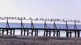 Υπόλοιπο seagulls στο κιγκλίδωμα της αποβάθρας, μια πρόσδεση βαρκών Στοχαστική θέση απόθεμα βίντεο