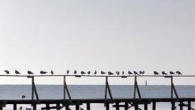 Υπόλοιπο seagulls στο κιγκλίδωμα της αποβάθρας, μια πρόσδεση βαρκών Στοχαστική θέση φιλμ μικρού μήκους