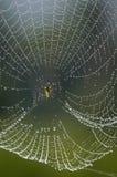 Υφαντής δροσιάς Στοκ φωτογραφία με δικαίωμα ελεύθερης χρήσης