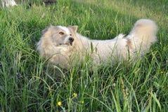 υψίπεδο κυνηγιού παιχνιδιών επεισοδίου σκυλιών πουλιών Στοκ εικόνες με δικαίωμα ελεύθερης χρήσης