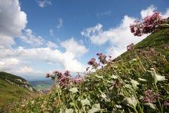 υψηλά βουνά λουλουδιών Στοκ Φωτογραφία